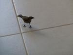Scabby Bird