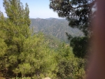The Paphos Forest